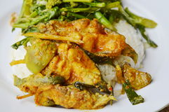 Spicy curry fish and stir fried flower Chinese cabbage with pork on rice Royalty Free Stock Photos