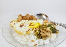 Spicy fried chicken and squid with basil leaves on rice topping fried egg Stock Images