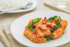 Spicy fried fish with basil and rice (Pad kra prao), Thai food Royalty Free Stock Photo