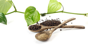 Spicy herb - black pepper Royalty Free Stock Photo