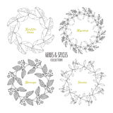 Spicy herb circle frames collection. Hand drawn kaffir lime, borage, hyssop, stevia Royalty Free Stock Photo