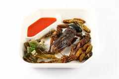 Spicy herb fried insect Stock Photos