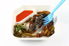 Spicy herb fried insect and blue fork Stock Photos