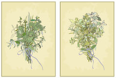 Spicy herbs. Collection of fresh herbs. Illustrati Stock Photography