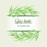 Spicy herbs in a realistic style, frame on background Royalty Free Stock Image