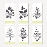 Spicy herbs silhouettes collection. Hand drawn cilantro, parsley, tarragon, dill, rosemary, thyme Stock Photography