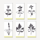 Spicy herbs silhouettes collection. Hand drawn mint, melissa, stevia, lavender, lovage, chervil Stock Images