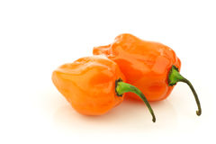 Spicy hot adjuma peppers(Capsicum chinense) Stock Images