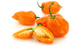 Spicy hot adjuma peppers(Capsicum chinense) Stock Photography