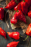 Spicy Hot Bhut Jolokia Ghost Peppers Royalty Free Stock Photography