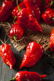 Spicy Hot Bhut Jolokia Ghost Peppers. On a Background Royalty Free Stock Image
