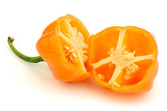 Spicy hot cut adjuma pepper(Capsicum chinense) Stock Photography