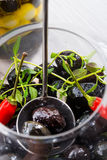 Spicy marinated olives Royalty Free Stock Images