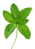 Spicy mint Royalty Free Stock Image