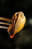 Spicy mussel on a fork. Royalty Free Stock Photo