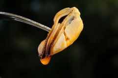 Spicy mussel on a fork, Spain. Stock Photography