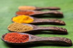 Spicy powders Royalty Free Stock Photos