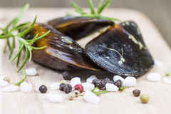 Spicy raw mussels. Raw mussels spicy with rosemary and peppercorns Stock Photography