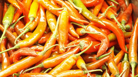Spicy red chili.close up and selective focus. Red chili.close up.background Stock Photos