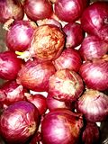Shallot. Spicy shallot red food cook kitchen royalty free stock image
