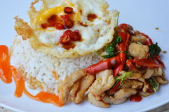 Spicy stir fried chicken with basil leaf and egg Thai favourite easy meal on dish. Spicy stir fried chicken with basil leaf and egg Thai favourite easy meal on Stock Images