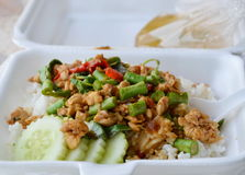 Spicy stir fried chicken with basil leaf on rice in foam box for take home Stock Photography