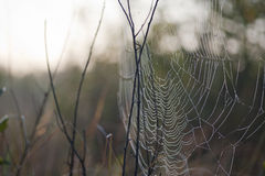 Spide home. Spider web covered in raindrops Royalty Free Stock Image