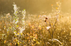 Spider web at dawn Stock Photography