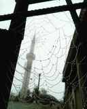 autumn morning and raindrops on spider web Stock Photos