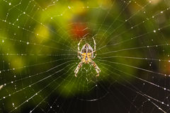 Spider´s empire Stock Images