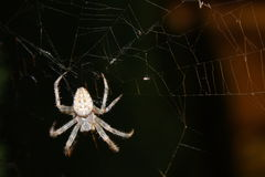 Spider #1 at night Stock Photos