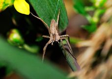 Spider. A variety of spiders in nature Stock Photography