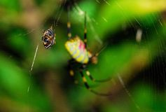 Spider. A variety of spiders in nature Stock Photos