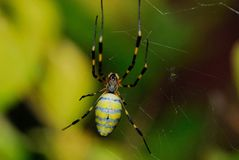 Spider. A variety of spiders in nature Royalty Free Stock Image