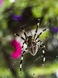 Spider. This spider in Changchun City Royalty Free Stock Photo