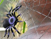 Spider. Shot of a spider (tarantula), on its spiderweb.  (Decoration for Halloween Stock Photography