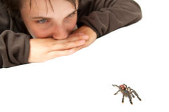 Free Spider Stock Image - 12079301