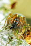 Spider. Macro close-up shot Royalty Free Stock Photography