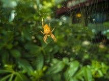 01-Spider Imagem de Stock
