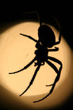 Spider. A spider in it's net front of a garden lamp royalty free stock photos