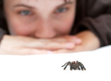 Free Spider Royalty Free Stock Photos - 13016338