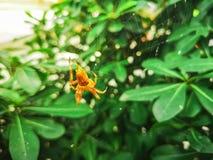 191-Spider stockfotografie