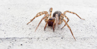 Spider. This is a spider in china Royalty Free Stock Image