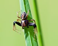 Spider. Macro shot of spider on the grass Royalty Free Stock Images