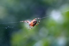 Spider. And his web nature Royalty Free Stock Photo