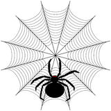 Spider. Black spider on the web Stock Photo