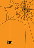 Spider. Vector illustration of spider's web with spider Royalty Free Stock Image