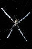 Spider. Large spider in the center of a web on a black background Stock Photography