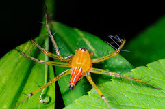 Free Spider Royalty Free Stock Image - 18506586