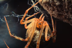 Spider 2 royalty free stock photography